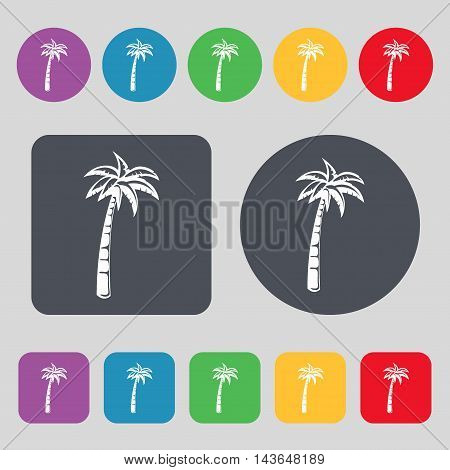 Palm Icon Sign. A Set Of 12 Colored Buttons. Flat Design. Vector