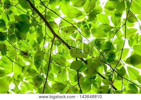 Forest canopy background texture