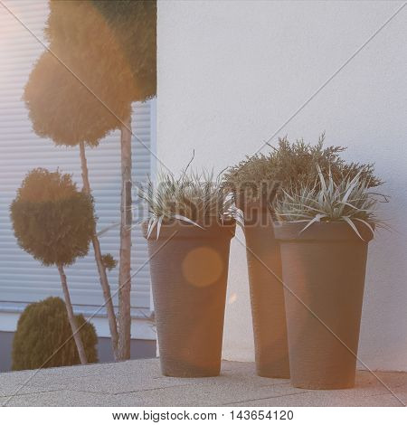 Flowerpots Outside The House