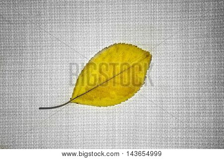 Leaf on fabric abstract background with color.