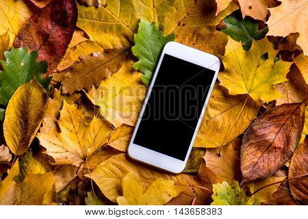Autumn Composition. Colorful Leaves And Smart Phone. Studio Shot