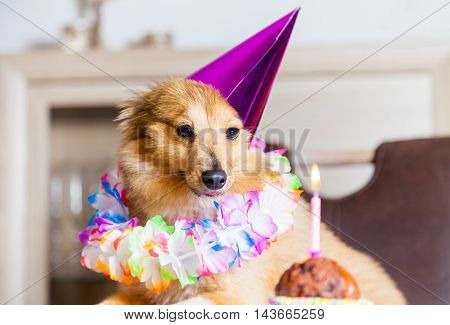 happy birthday dog looks to the candle
