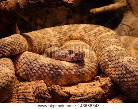 a beautiful picture of a snake. are seen in detail its component parts.