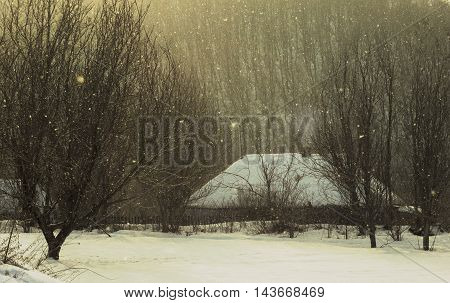 Winter landscape, pines and cottage covered with snow,