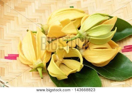 Ylang-Ylang flower ,Yellow fragrant flower on basket