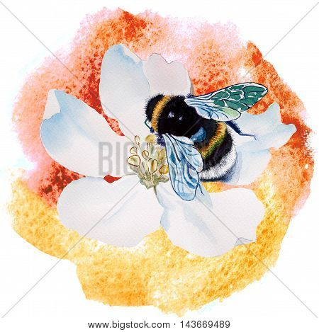 Watercolor bumblebee sitting on flower apple tree closeup