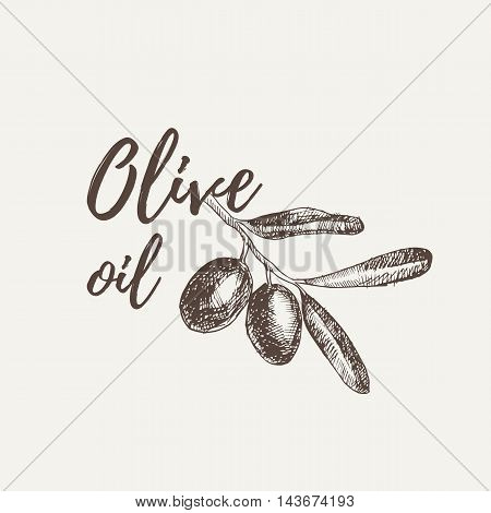 Vector Hand Drawn Sketch Of Olive Tree Branch. Olive Oil Lettering. Vector Illustration. Eps 10