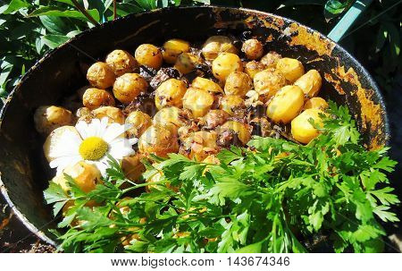Small new potatoes with mushrooms baked in the oven with fresh herbs