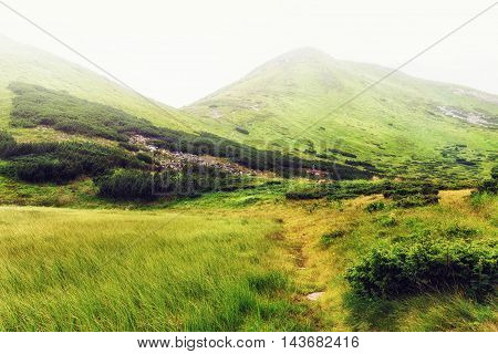 Picturesque Carpathian mountains in haze nature landscape Ukraine