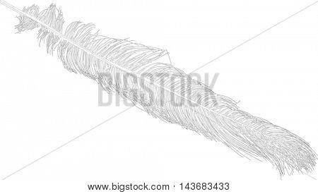illustration with ostrich feather silhouette isolated on white background