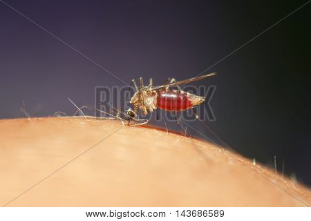 nasty insect mosquito drinks the blood of the person causing itching
