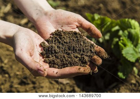 Black soil in woman hands, sunny day
