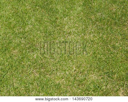 Uniform background of green grass