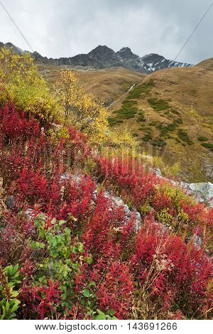 Autumn Landscape with Chamerion in the mountains.. Caucasus, Georgia, Zemo Svaneti