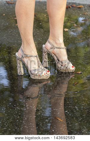 Women's legs in fashionable shoes and their reflection in a puddle.