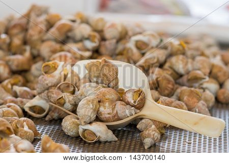 Brugge Belgium - August 10 2016: Heap of cooked sea snails on sale at public market. Beige scoop in the photo. Brown dominant color.