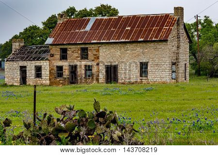 An Interesting Abandoned Old Rock Homestead with Tin Roof in a Beautiful Field Loaded with the Famous Texas Bluebonnet (Lupinus texensis) Wildflowers.