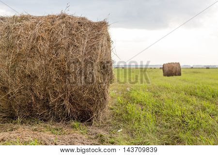 Pair of round hay bale on green grass