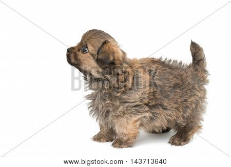 puppy looking baby isolated on white background