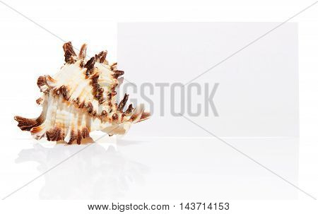 Blank White Visit Card With Sea Shell Isolated On White