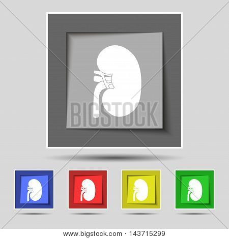 Kidney Icon Sign On Original Five Colored Buttons. Vector