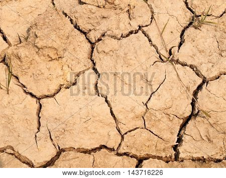 Water crisis,  cracked earth near drying water.