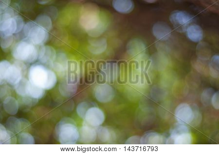 Blurred Leaves And Nature Bogeh
