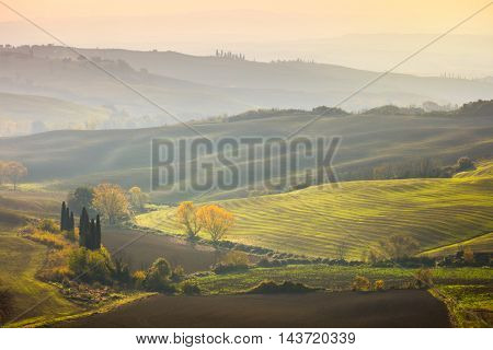 Natural Sunny Autumn landscape - Golden Trees in Wavy fields at sunrise, Tuscany, Italy, Europe