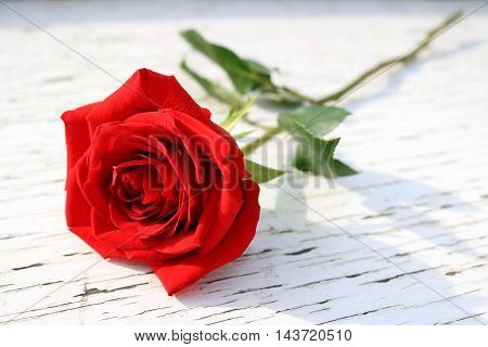 Red rose on a white table with cracked peeling paint.