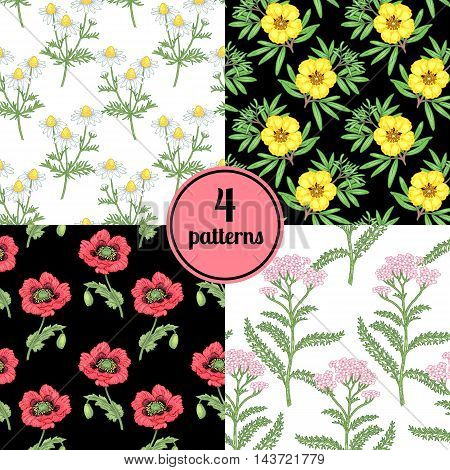 Set of four seamless vector patterns with various plants chamomile poppy yarrow cinquefoil.