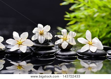 Still life with gardenia and plant with therapy stones