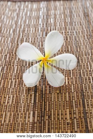 white frangipani on mat