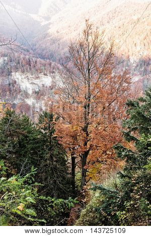 Colorful Forest In The Mountains, Beauty In Nature