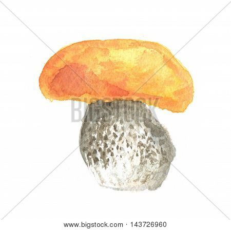 Watercolor mushrooms. Healthy food for autumn nature concept. Delicious edible mushrooms.