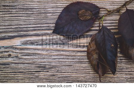 Yellow and gray leaves on wooden background
