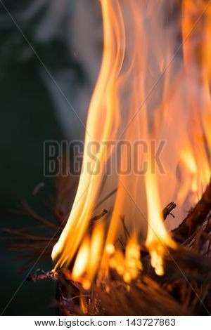Bonfire, Burning branches, macor fire and smoke