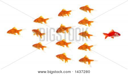 Red Goldfish Leaving Group