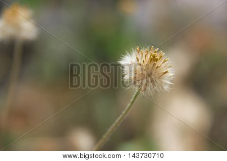 dry grass flowers with selective and soft focus.