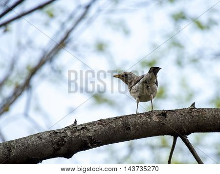 Sparrow bird. Birds in wildlife. View of beautiful bird which sits on a branch under sunlight landscape. Sunny, amazing, sparrow image.