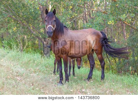two horses mother and child standing on the meadow