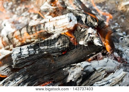 Saksaul Burning In The Fire For Barbecue