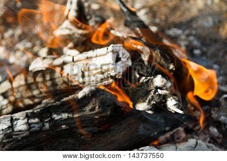 Saksaul Burning In Fire