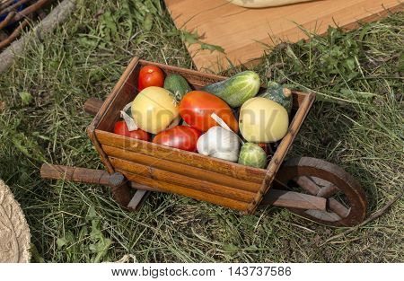 fresh vegetable harvest is in the trolley
