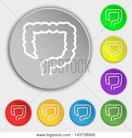 Large Intestine Icon Sign. Symbol On Eight Flat Buttons. Vector