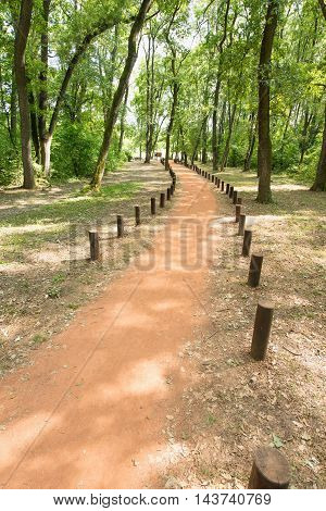 Forest path with tree stumps, toned image,