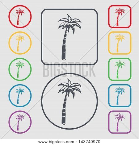 Palm Icon Sign. Symbol On The Round And Square Buttons With Frame. Vector