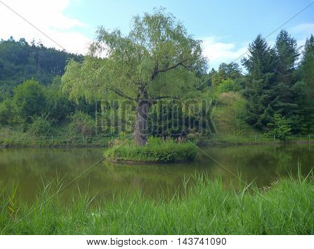 Reflection Of A Tree In A Pond
