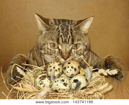 A cat found a nest of eggs. It's lucky.