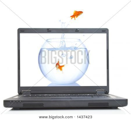 Goldfish Escape