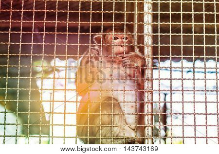 Monkey perched inside a steel cage with sunlight shining from behind.